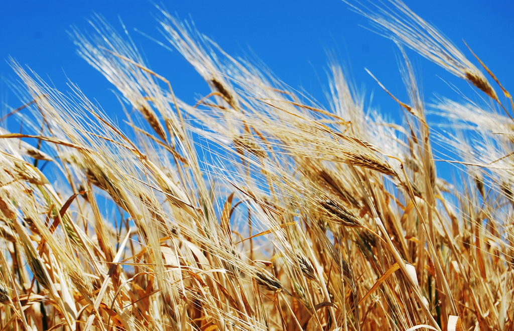 Seimo liberalai su ūkininkų organizacijomis aptars situaciją dėl sausros