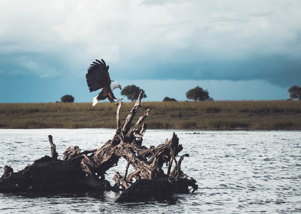 Aplinkosaugininkų taikiklyje – nelegaliai naikinami erelių lizdai