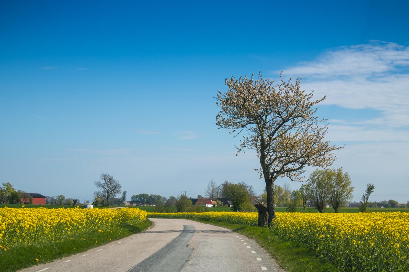 Šalies kelių dangos sausos, vietomis – drėgnos