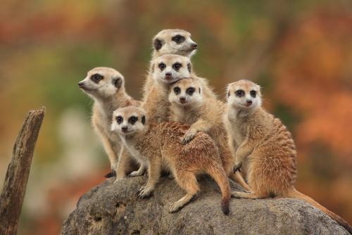 Kauno Megoje – pirmasis Lietuvoje kontaktinis zoologijos sodas