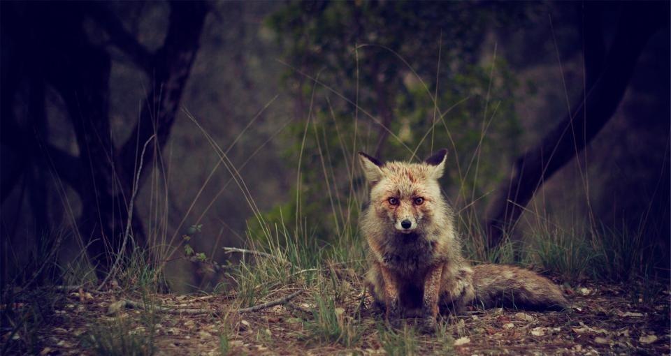Nužudyti laukinį gyvūną - žygdarbis, ar beširdiškas nusikaltimas? (VIDEO)