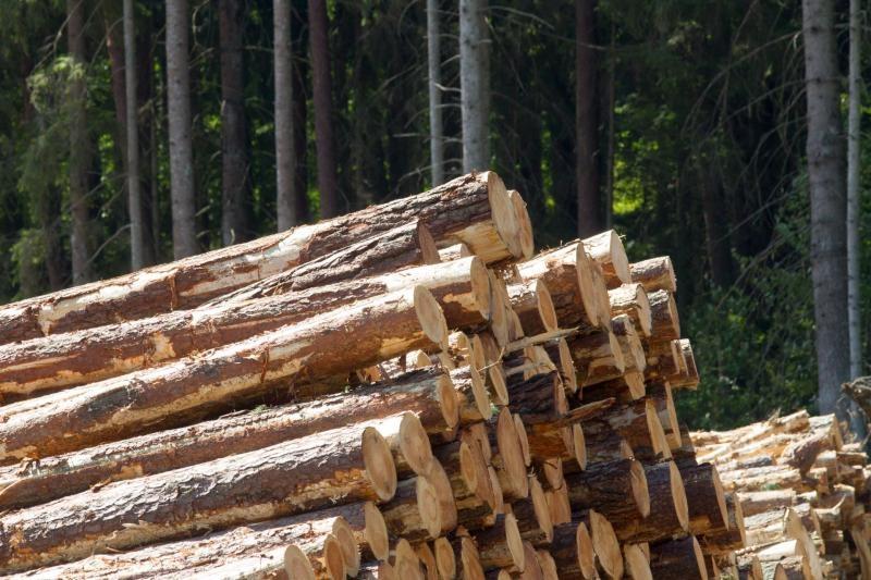 Privačių miškų savininkams primenama apie mokesčius