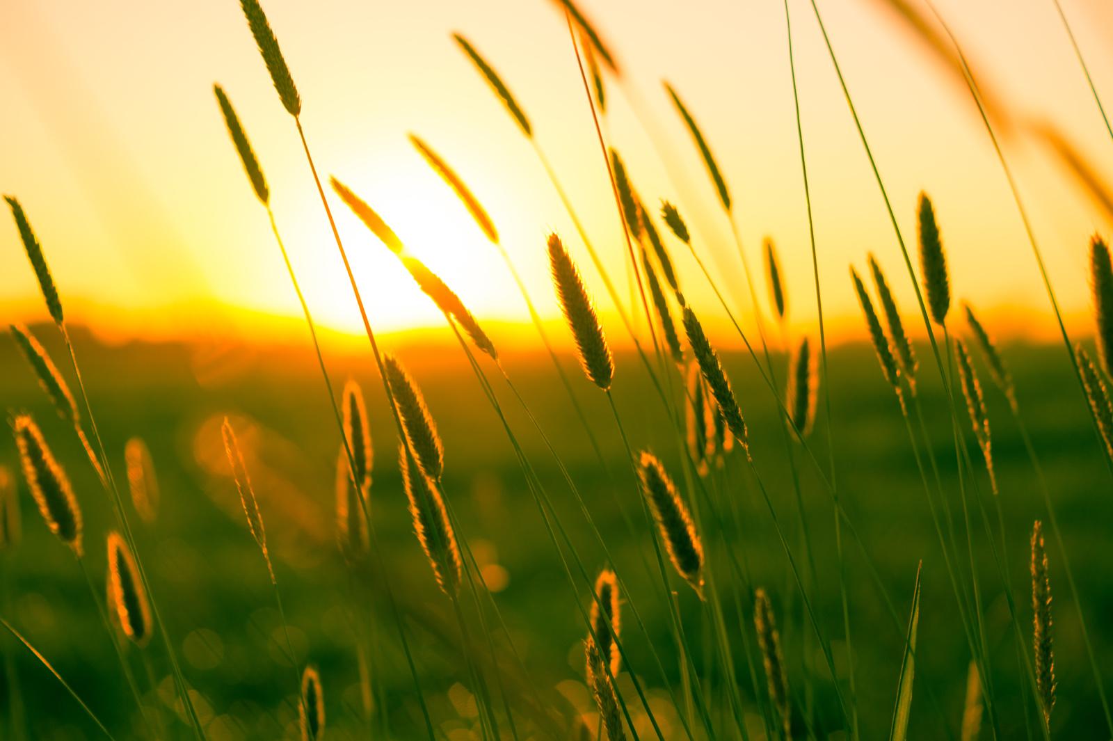 Orai: trauksis lietingos ir grįš saulėtos dienos