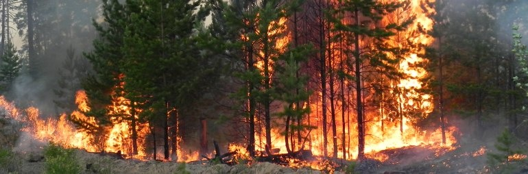Klaipėdoje padegtas miškas