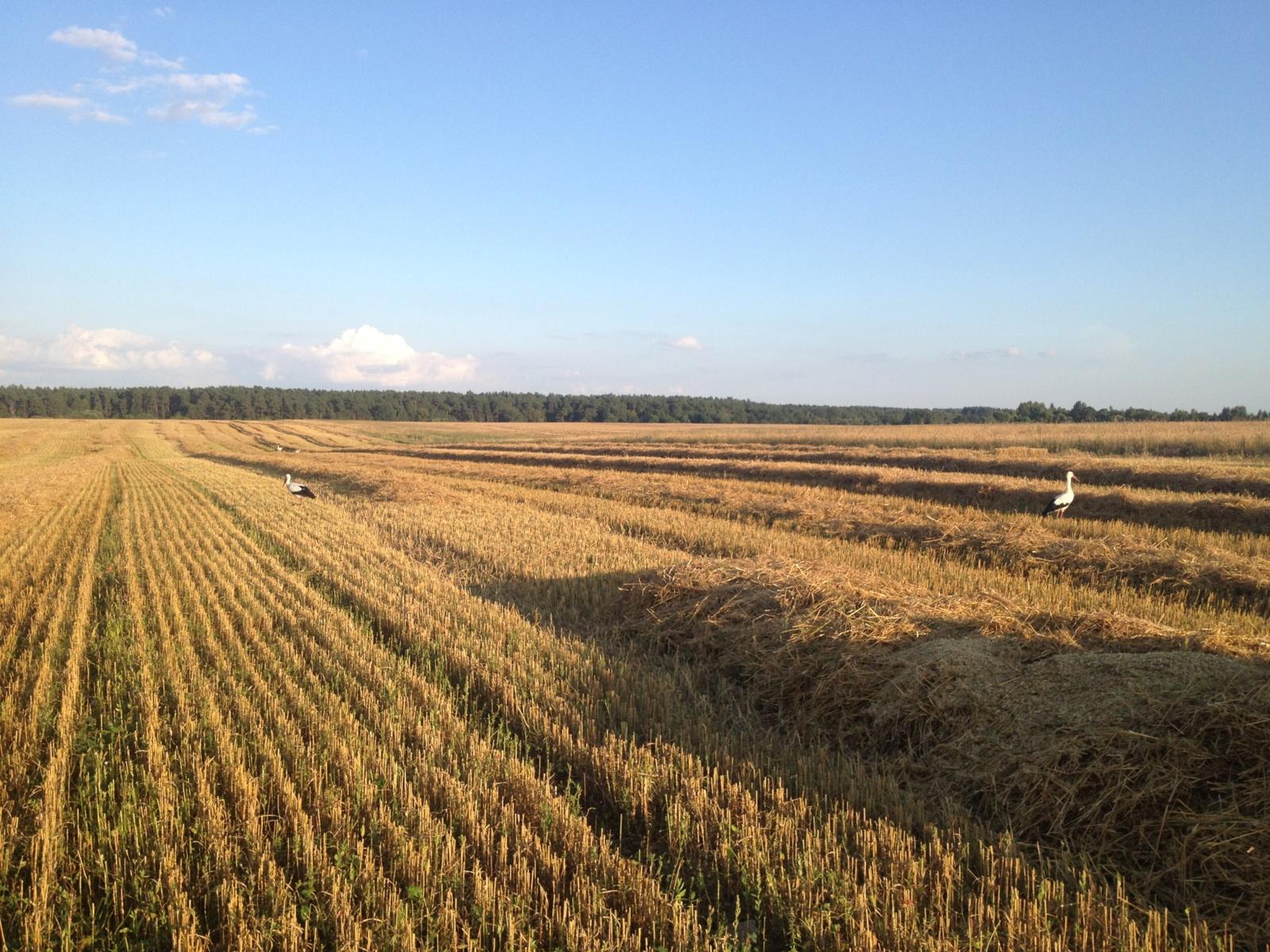 prekiauti žemės ūkio galimybėmis 24 pasirinkimo sandoriai gyvai