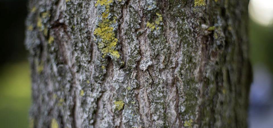 Telšių rajone neteisėtai kirsti medžiai