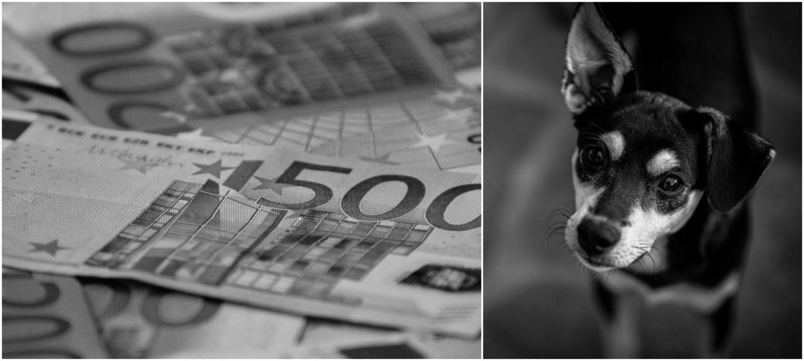 Lietuviams skausmingiausios – grynųjų pinigų ir naminių gyvūnų vagystės