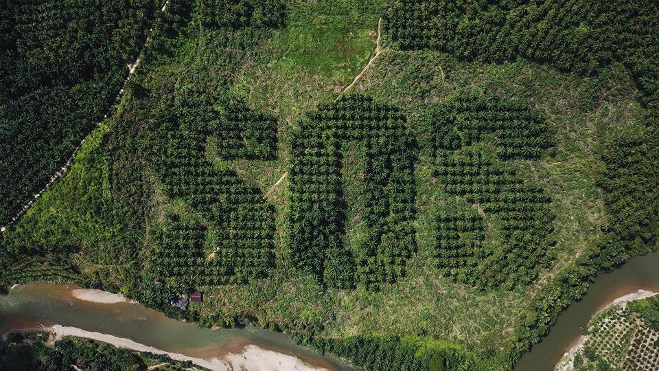 Lietuvis Sumatroje siekia atkreipti dėmesį į atogrąžų miškų kirtimą