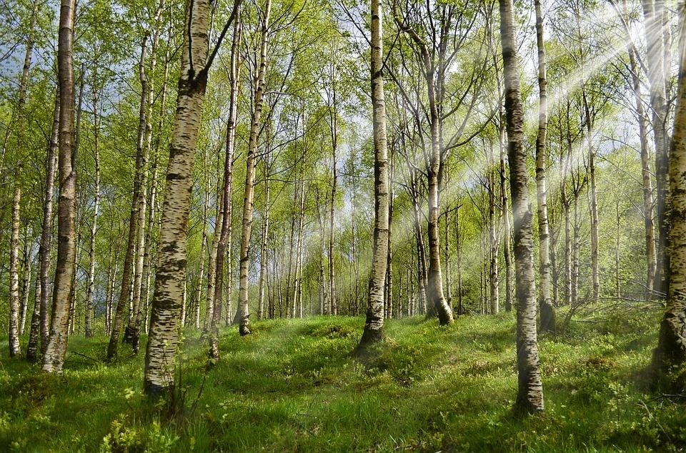 Lietuva – erkių platinamų ligų epicentras