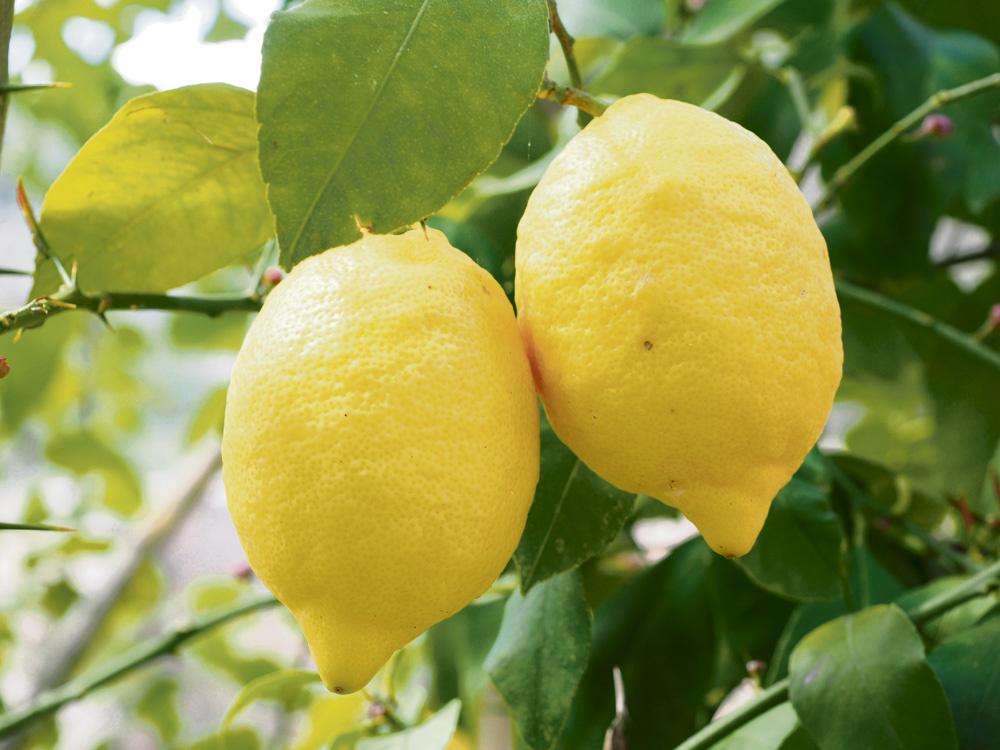 8 citrinų panaudojimo būdai, kuriuos turi žinoti kiekviena moteris