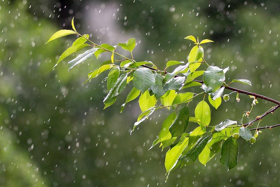 Kodėl lietus ir naujas telefonas kvepia panašiai ir mums tai patinka?