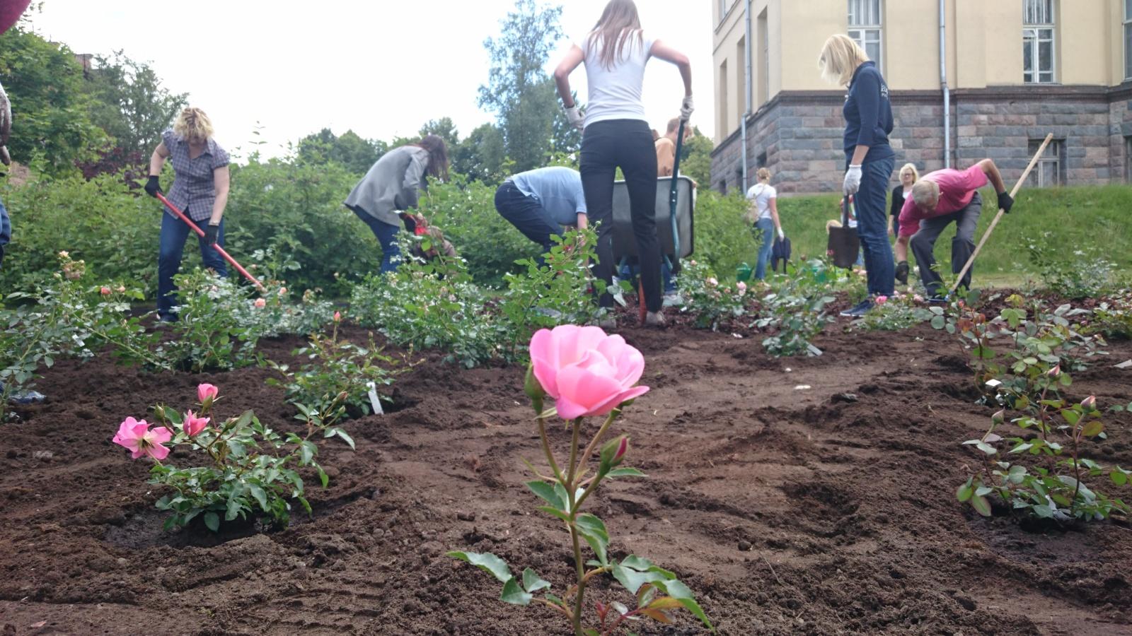 Ch. Frenkelio rožyne – graži verslininkų iniciatyva: pasodinta 100 vardinių rožių (vaizdo reportažas)