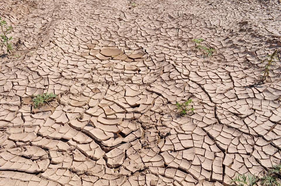 Jurbarko rajone paskelbta ekstremalioji situacija dėl stichinės sausros