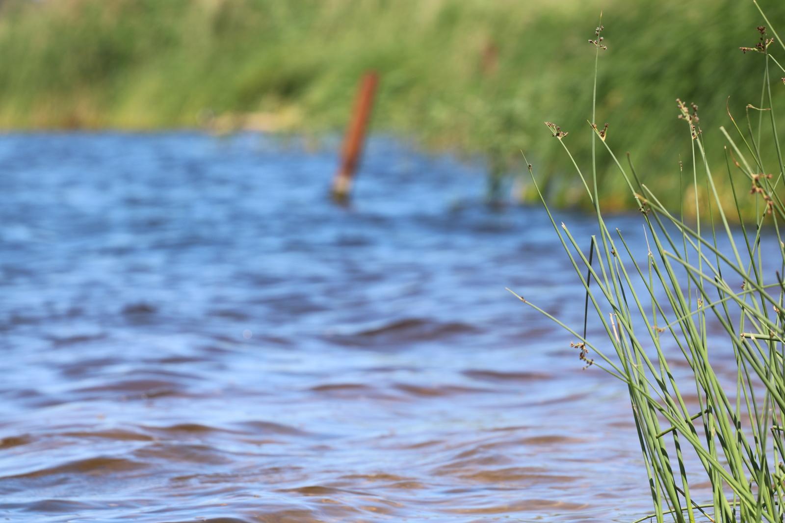 Atlikti Kėdainių rajono maudyklų vandens tyrimai