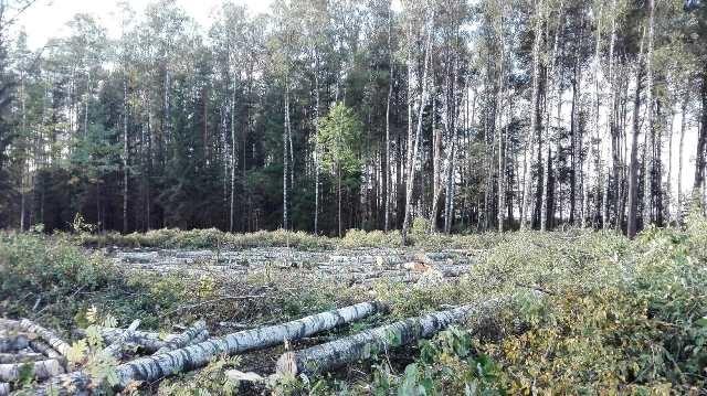 Miškų kirtimo tvarkai – Savivaldybės siūlymai