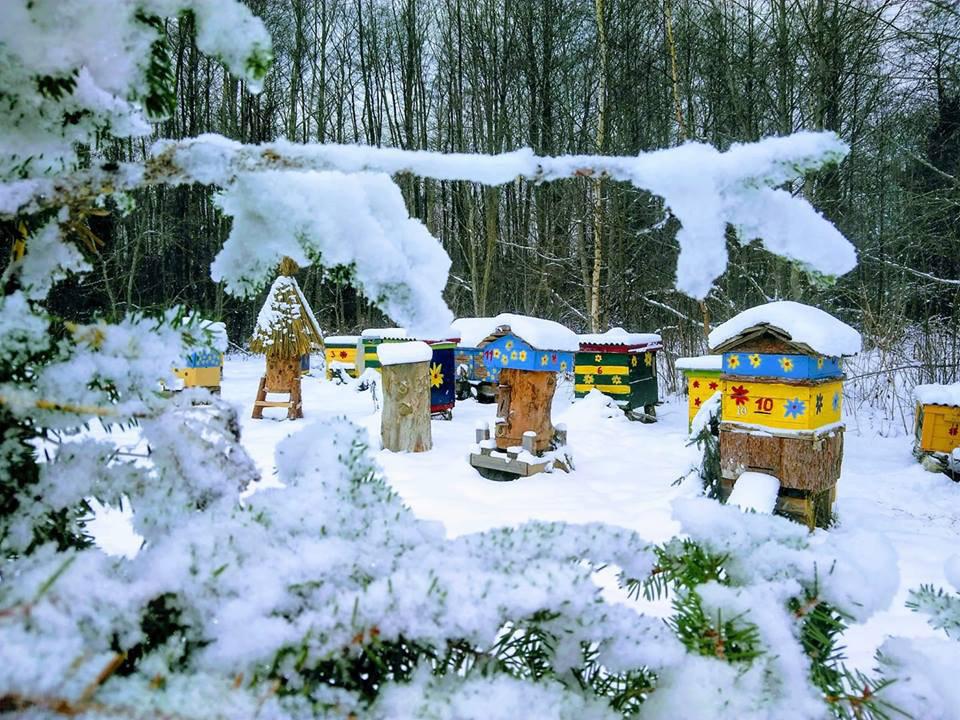 Ukmergės rajone žiemoja meška?