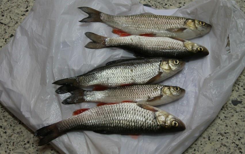 Brangi poledinė žvejyba Jonavoje