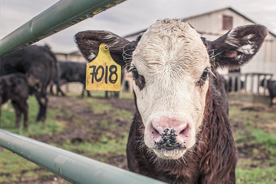 Svarbi informacija Širvintų rajone įregistravusiems ūkininko ūkį