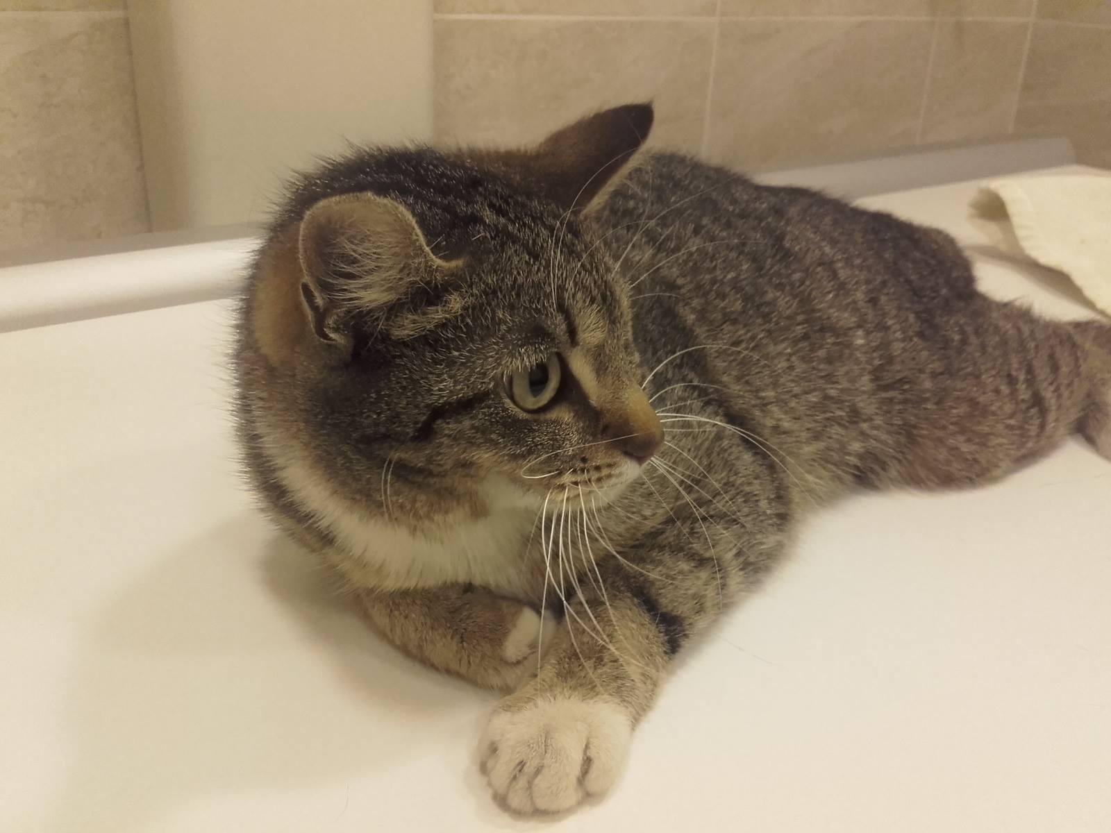 Sužalota nėščia katytė
