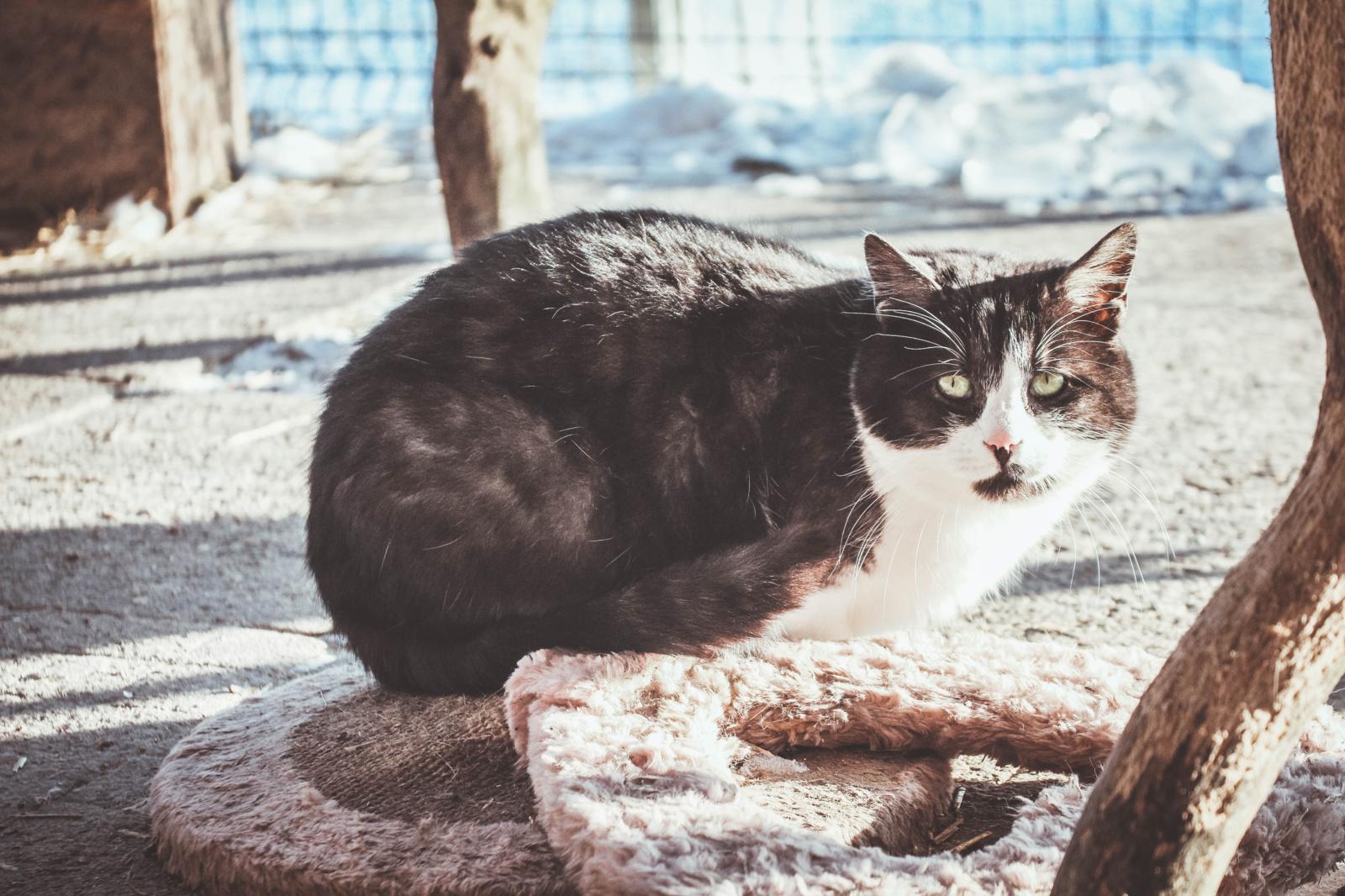 Kačių mityba: ką vertėtų žinoti?