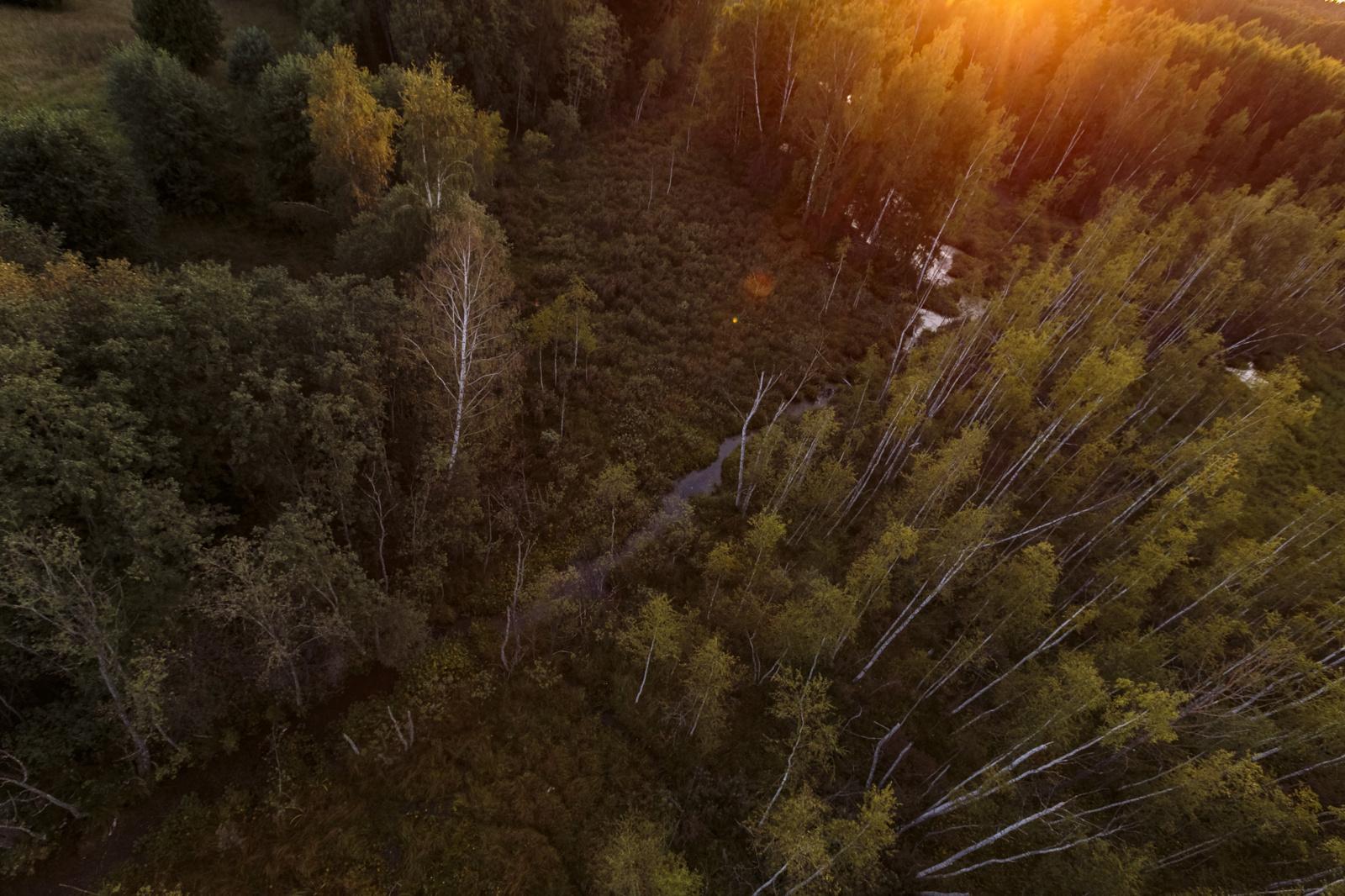 Lietuvos miškus užpuolė vabzdžiai: kertami medžiai, purškimui skirs beveik ketvirtadalį milijono eurų