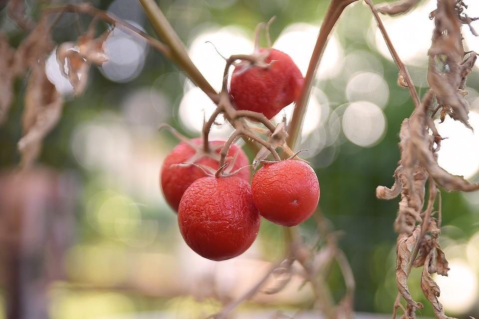 """""""Pavargę"""" vaisiai ir daržovės – ne išmetimui, o gardiems patiekalams"""