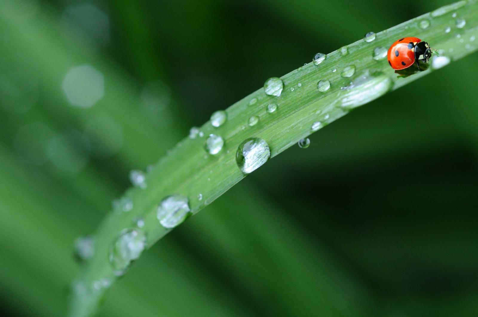 Orai: vis dažniau sulauksime lietaus