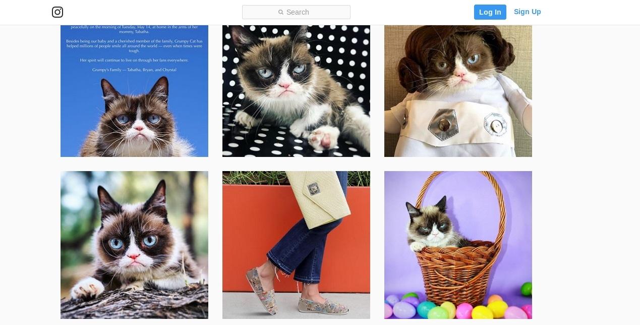 Mirė interneto legenda Grumpy Cat