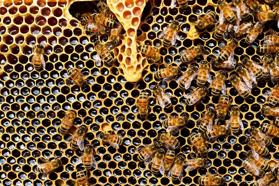 Vagių taikiniu tapo bičių koriai
