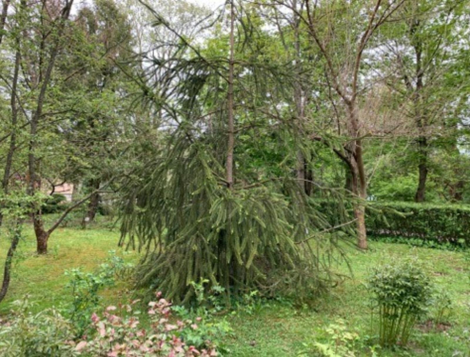 Pamokos botanikos sode. Kiekvienas mokinys globoja savo medį