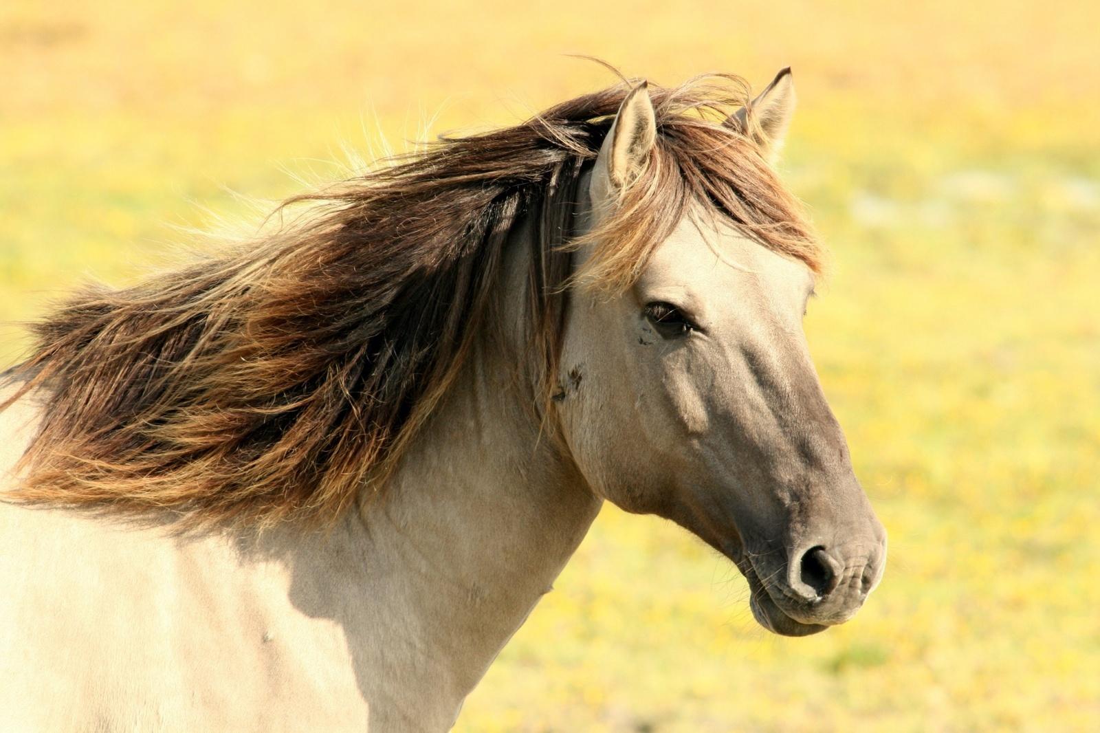 Iš ganyklų ilgapirščiai pavogė arklį