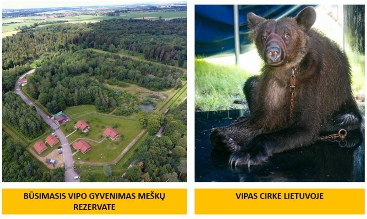 N. Zobovo meška iš zoologijos sodo išvežama į meškų rezervatą Vokietijoje