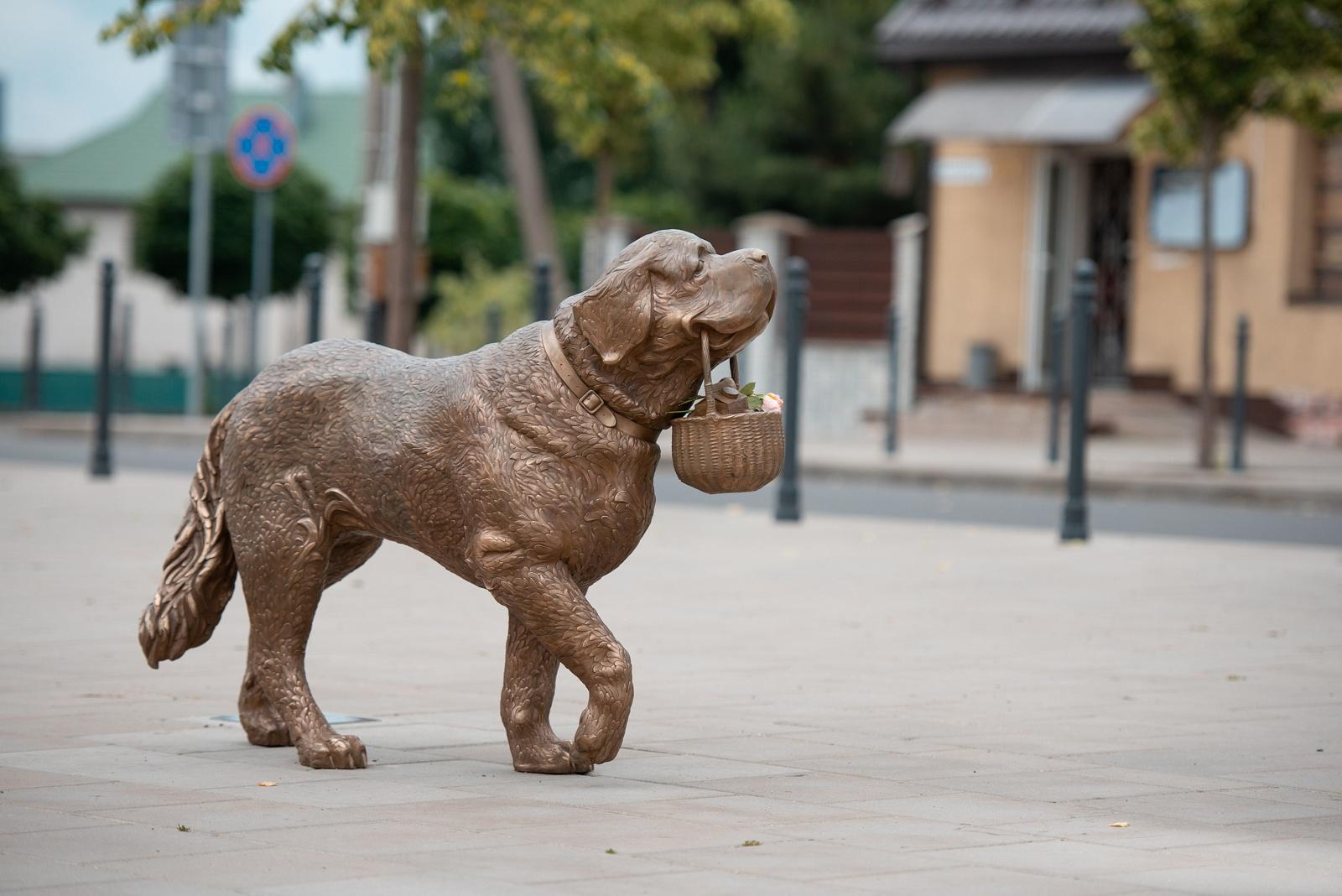 Kaune iškilo legendinei senbernarei Bitei skirta skulptūra