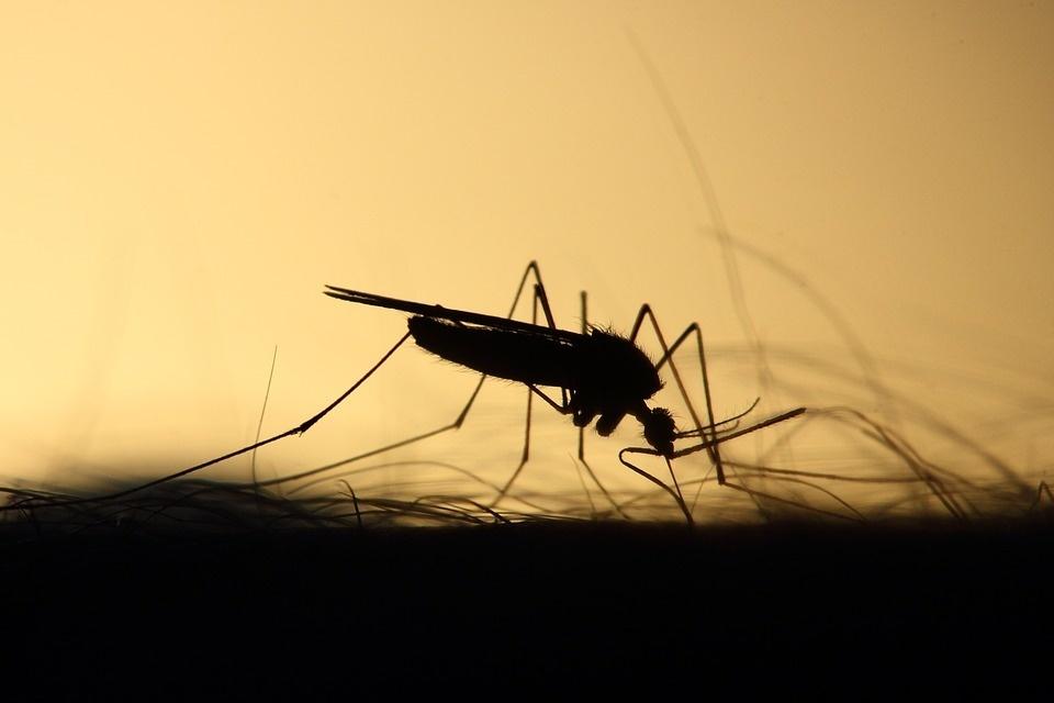 Kraujasiurbiai vabzdžiai ne tik apkartina poilsį, bet ir platina ligas