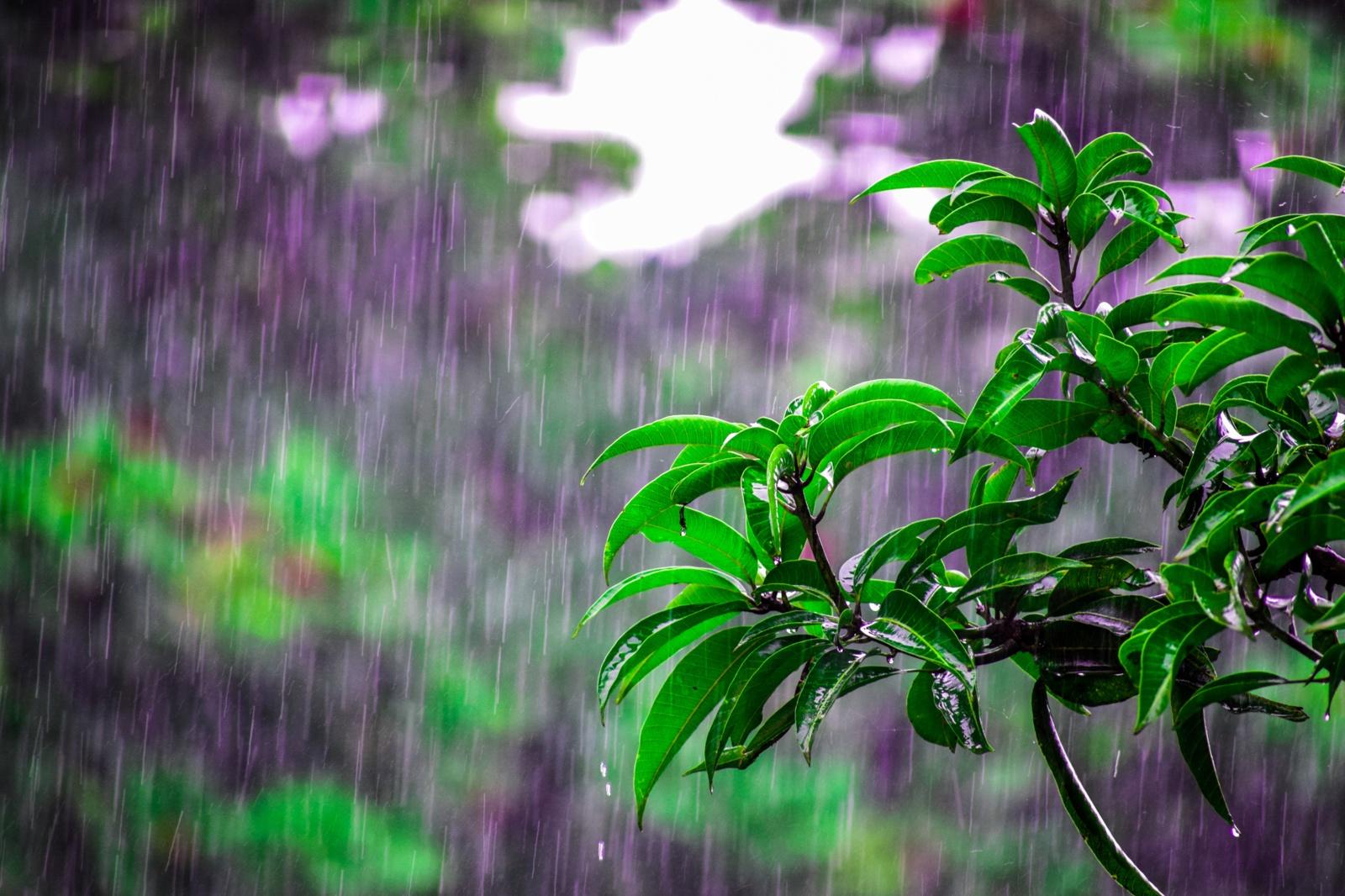 Po gražaus pirmadienio vėl prireiks skėčio