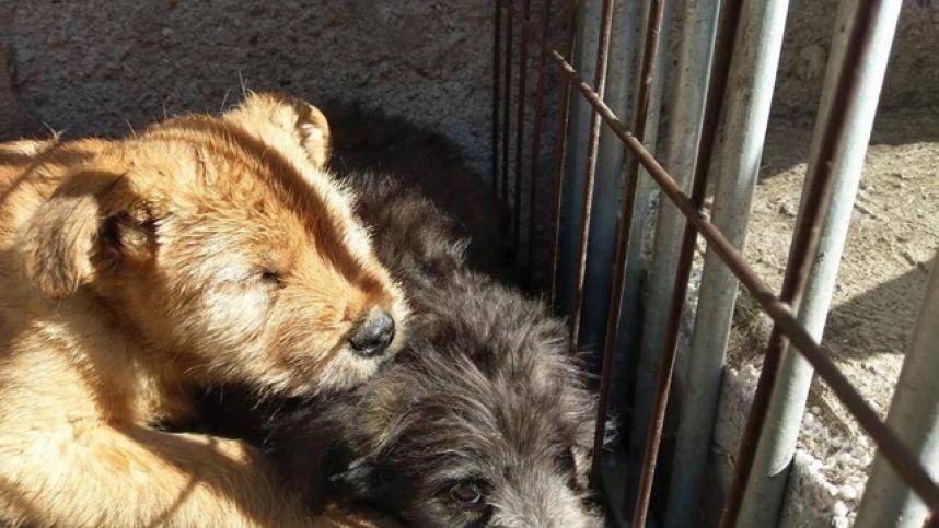 """VšĮ """"Penkta koja"""" priversta stabdyti veiklą: nebegalime padėti nė vienam šuniui ir tai yra galas"""