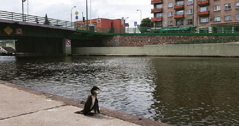 Mieste pamatytas paukštis pradžiugino ne visus