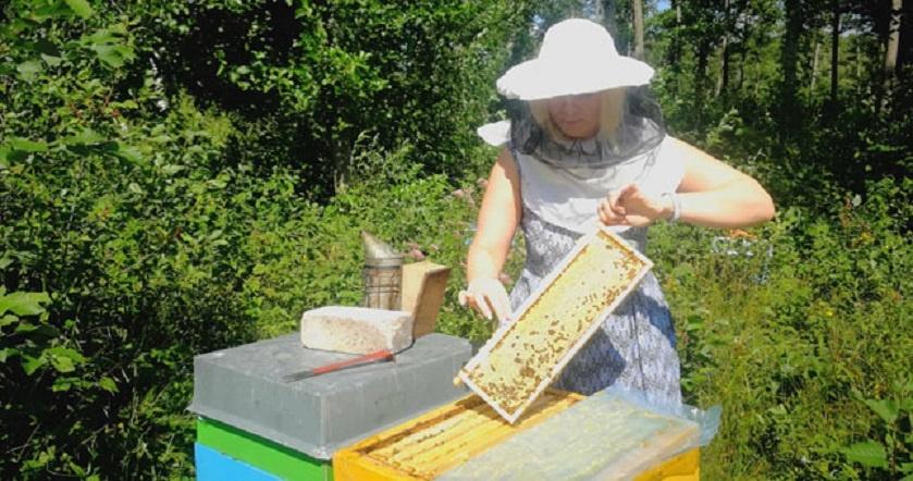 Po teismo posėdžių - pas bites