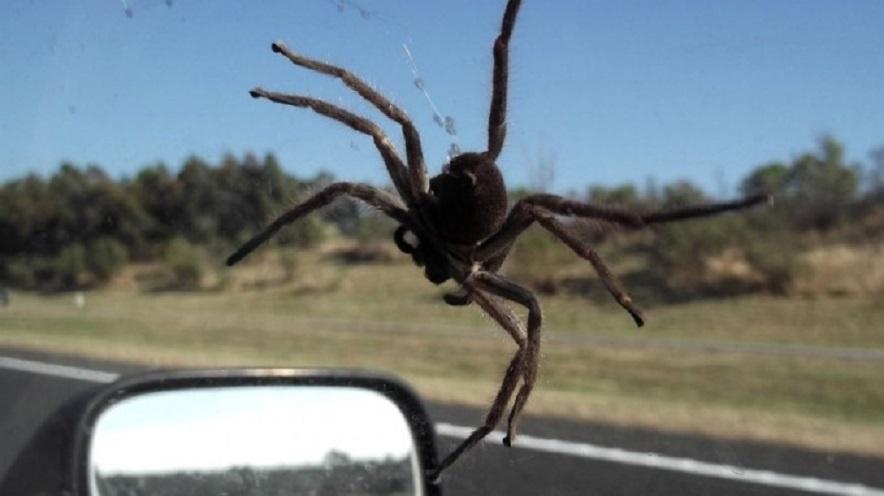 Mirtiną avariją lietuvis sukėlė išsigandęs voro