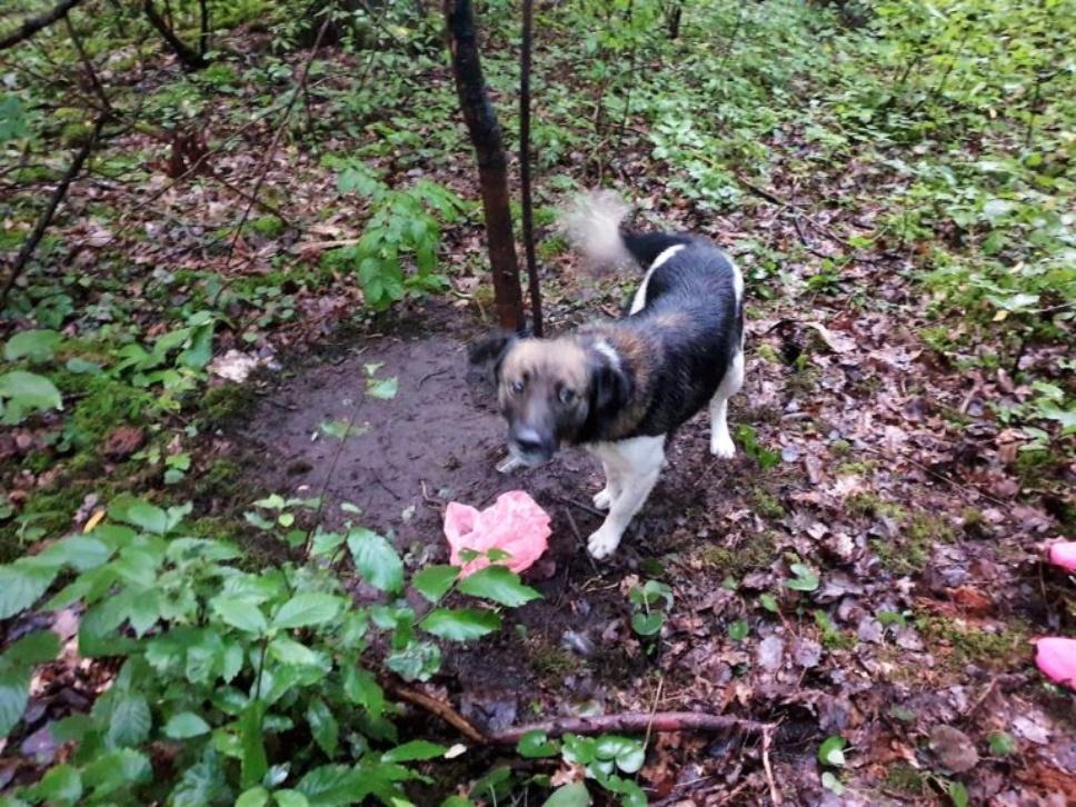 Nesuvokiamas žiaurumas: batraiščiu prie medžio pririštą šunį paliko mirti miškelyje