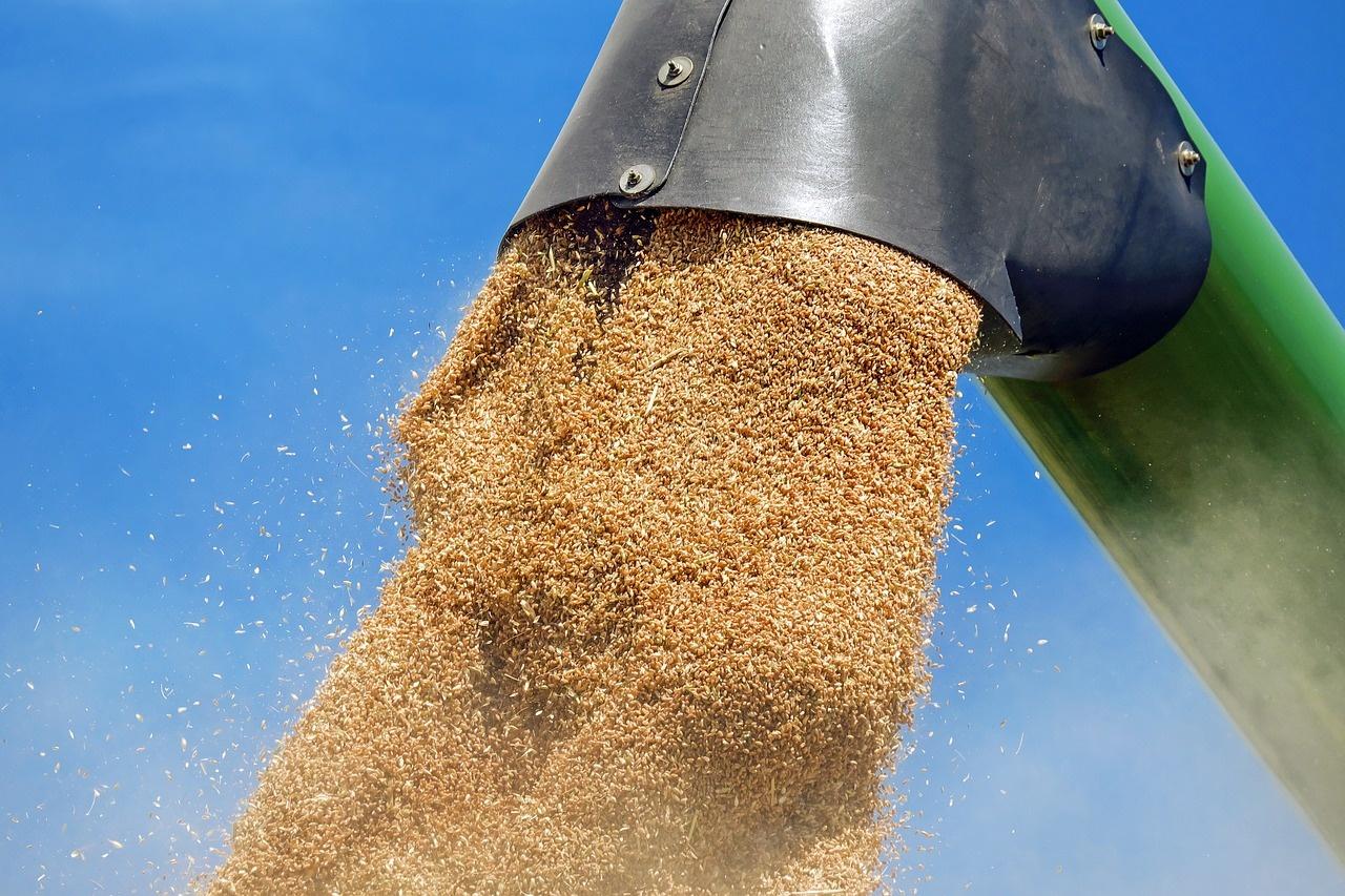 Žemdirbiai prognozuoja rekordiškai mažą grūdų derlių ir neskuba jo parduoti