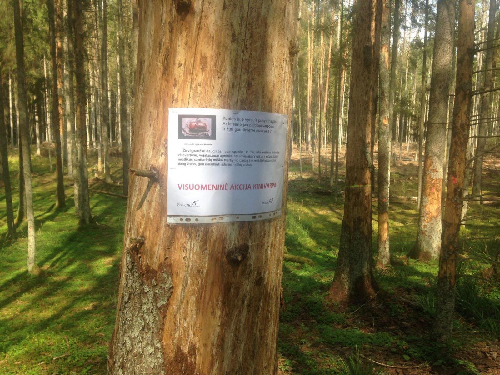 """""""Kinivarpos"""" akcijos rengėjai sužymėjo Punios šile mirštančių medžių židinius"""