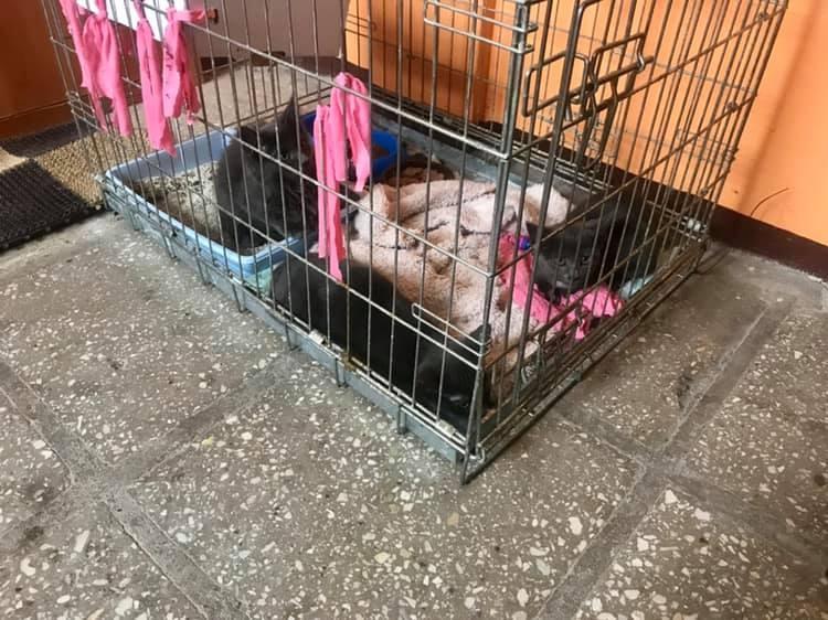 Ukmergės ugniagesiai iš gaisro daugiabutyje išgelbėjo tris kačiukus