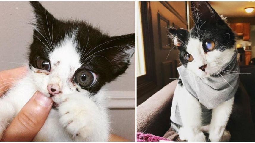 Prie durų paliktas kačiukas nustebino savo stiklinėmis akimis: neįprasta išvaizda – dėl retos ligos