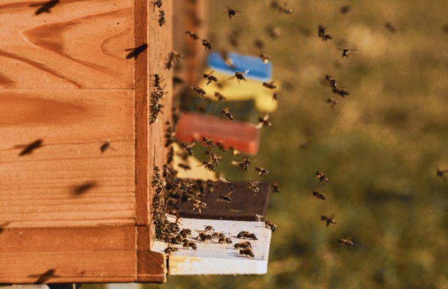 Bičių augintojai jau gali teikti paraiškas paramai už papildomą bičių maitinimą gauti