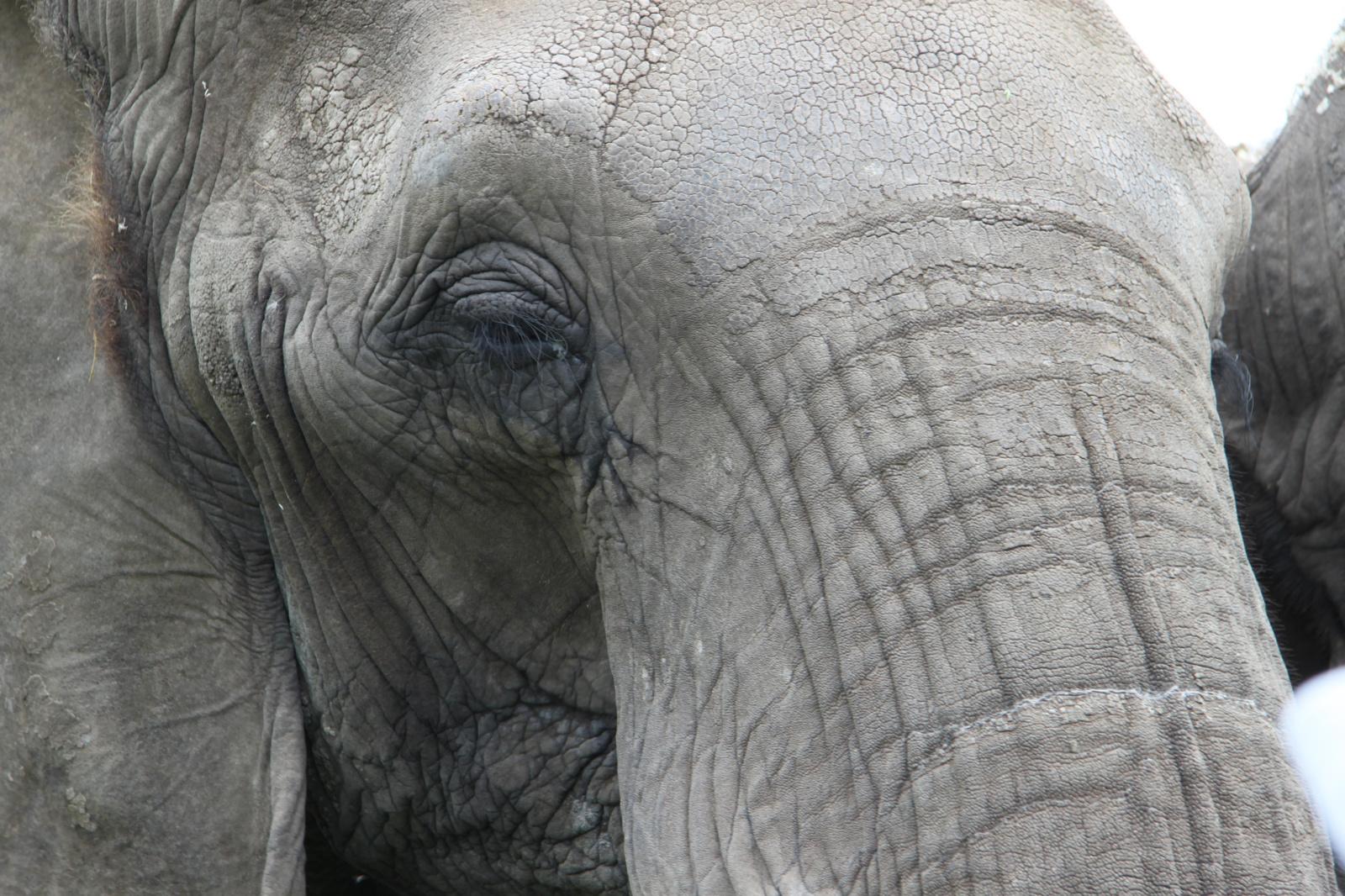 Vyriausybėje – siūlymas uždrausti naudoti laukinius gyvūnus cirko veikloje