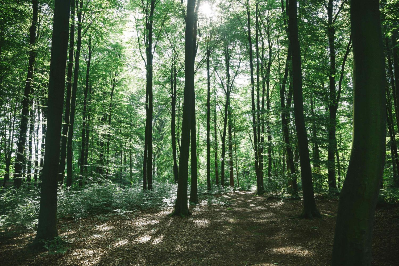 Ignalinos rajono miške rastas vyro kūnas