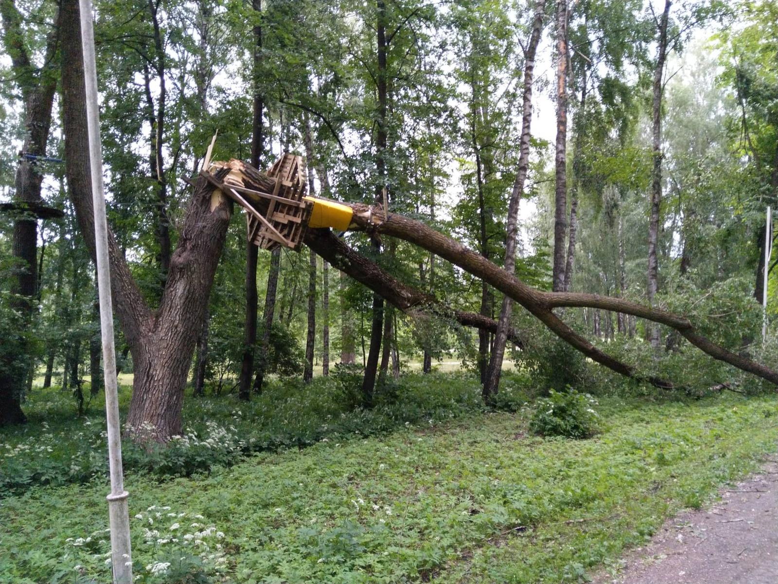 Dėl vėjo virto medžiai, 15 tūkst. vartotojų buvo sutrikęs elektros tiekimas