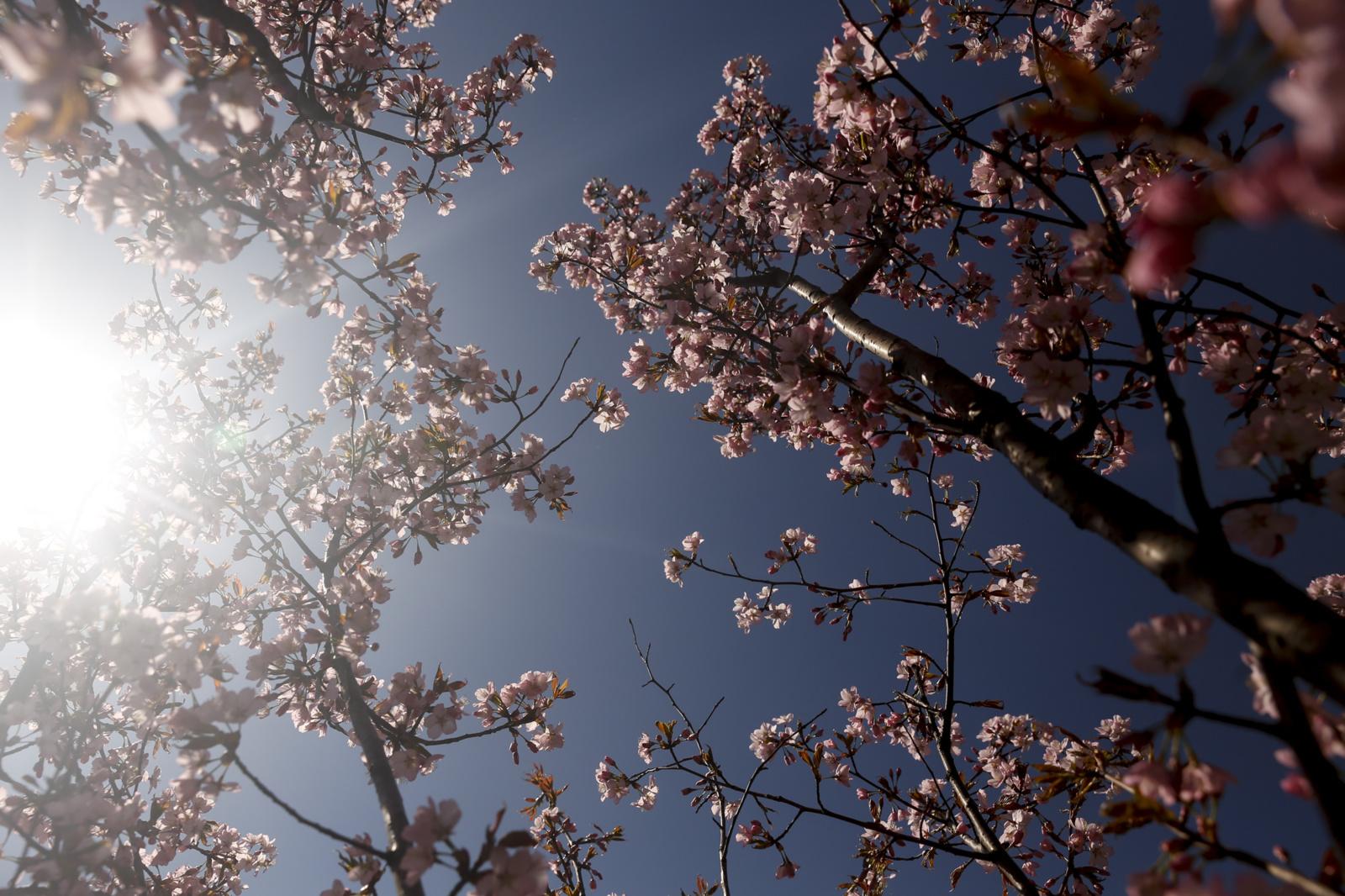 Politikai rengiasi skelbti Ch. Sugiharos metus, tikisi impulso santykiams su Tokiju