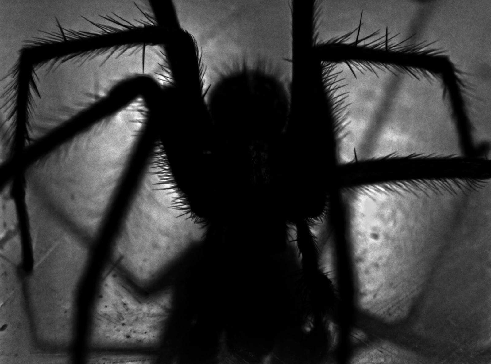 Dėl uraganų ir klimato kaitos vorai gali tapti gerokai agresyvesni